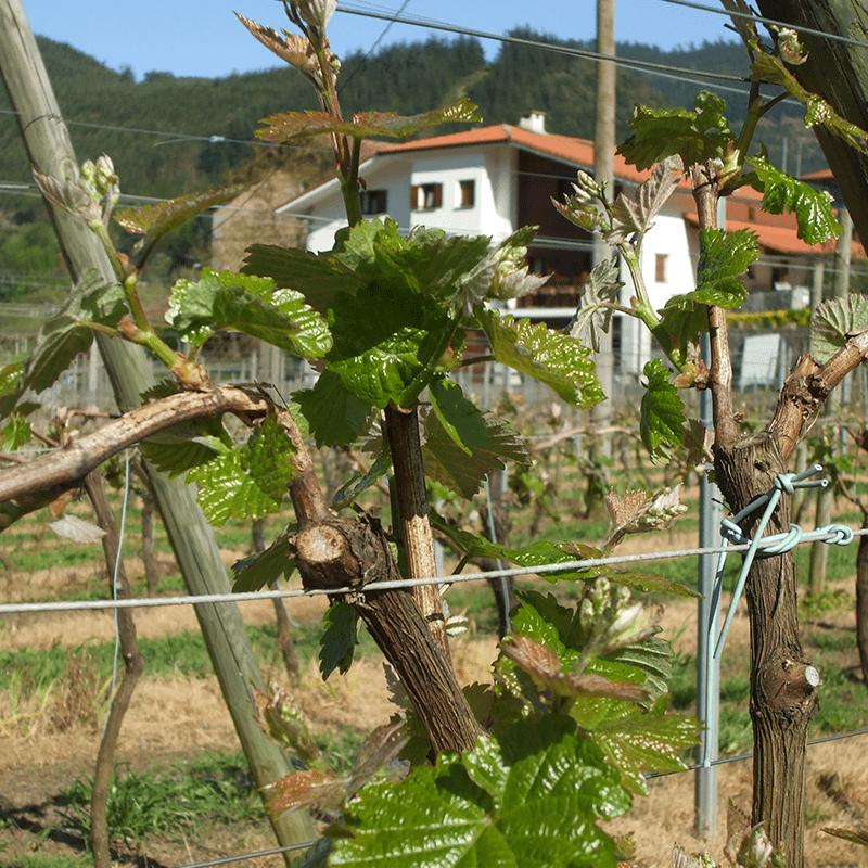 Axpe Sagardotegia, Markina-Xemein
